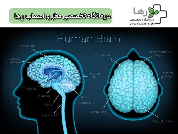 مغز و اعصاب رها